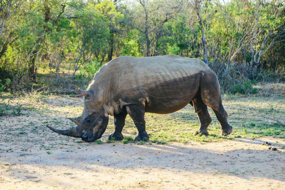 Sunrise Till Sunset - A 24 Hour South African Safari Diary (46)