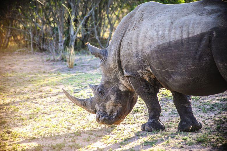 Sunrise Till Sunset - A 24 Hour South African Safari Diary (48)