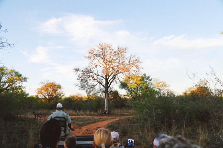Sunrise Till Sunset - A 24 Hour South African Safari Diary (50)