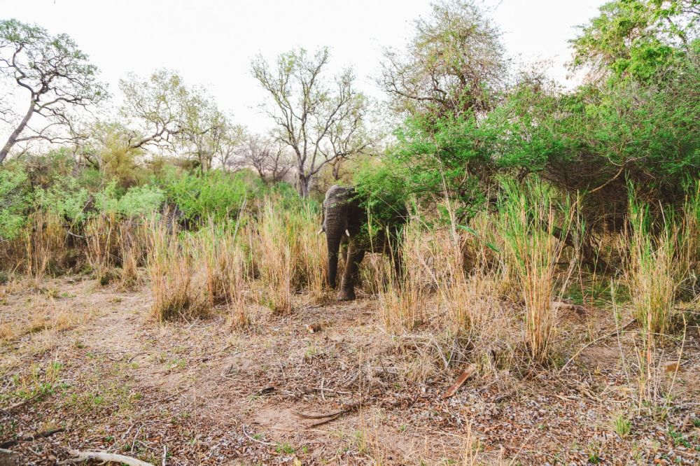 Sunrise Till Sunset - A 24 Hour South African Safari Diary (52)