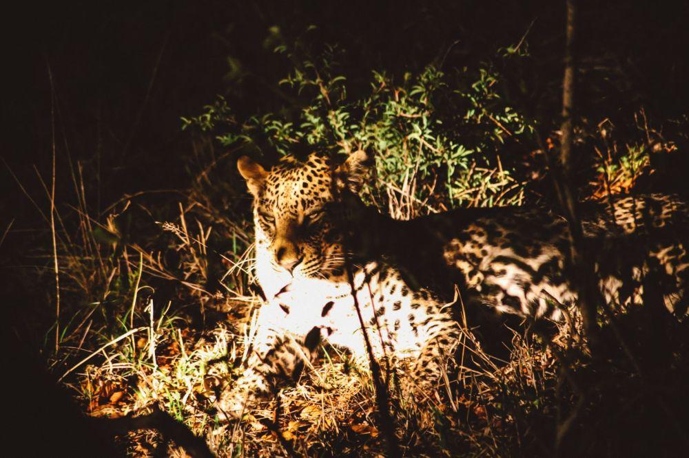 Sunrise Till Sunset - A 24 Hour South African Safari Diary (60)