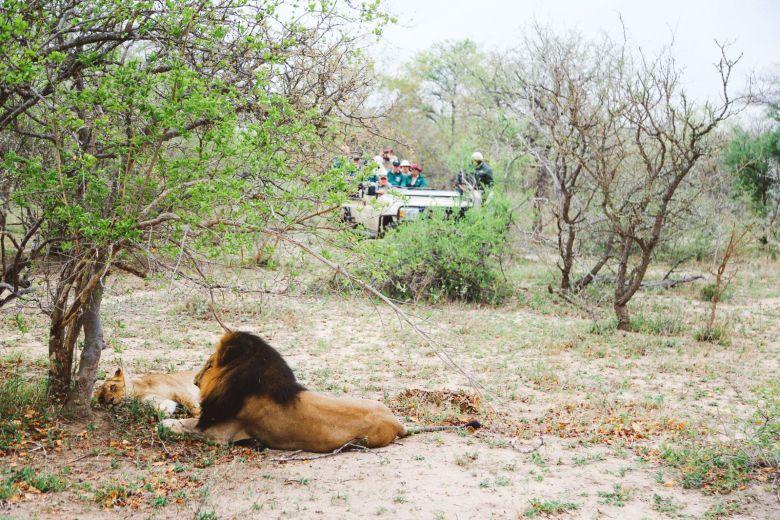 Jungle Love, South Africa (46)