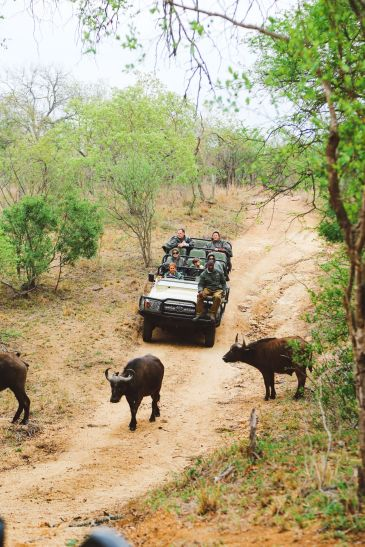 What's It Like To Be Stuck In A Pride Of Lions On Safari In South Africa? (30)