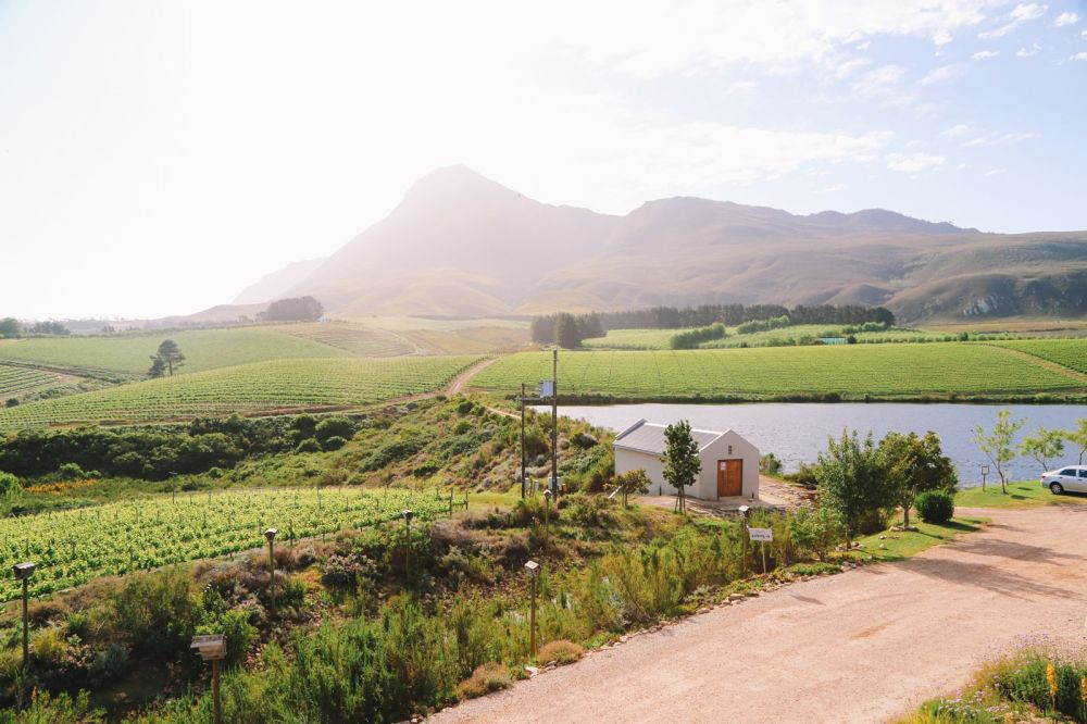 This Is The Best Place To Go Whale Watching In South Africa... And It Has Wine! (28)