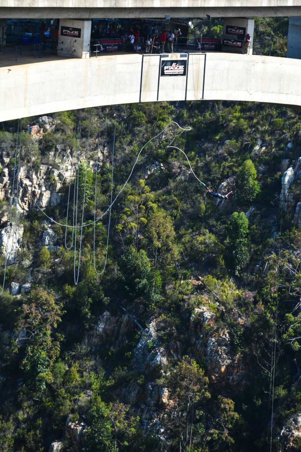 Eastern Cape Adventures In South Africa: Wines, 1,000 Year Old Trees And The Tallest Bungee In The World! (5)