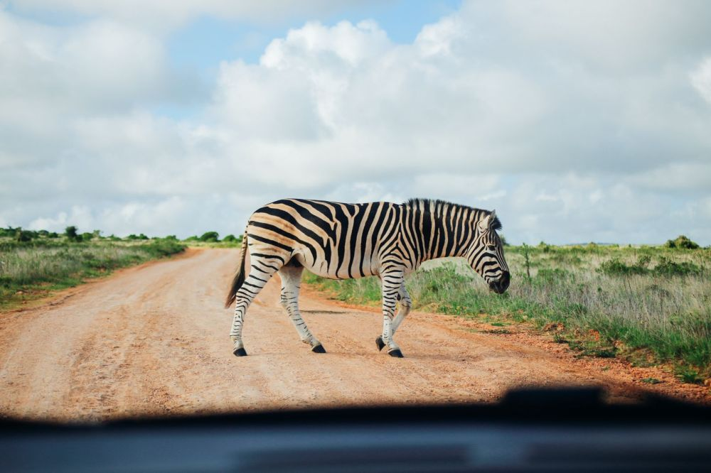 An Afternoon In Addo Elephant Park - A South African Must-Do! (4)