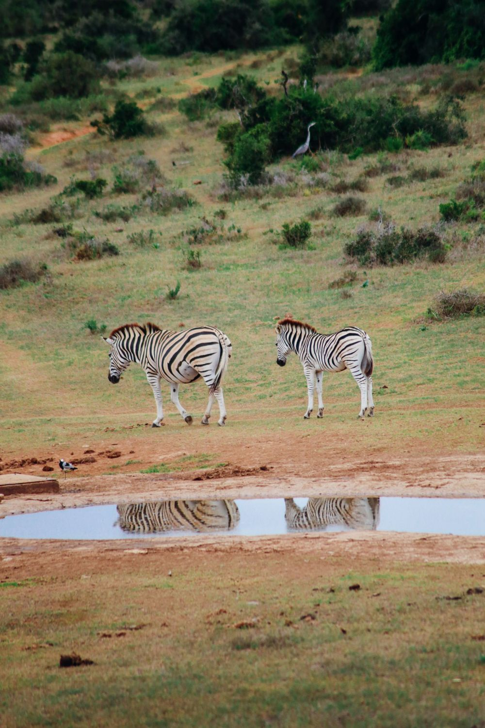 The Last 24 Hours In South Africa's Eastern Cape, Port Elizabeth, Addo National Park (17)