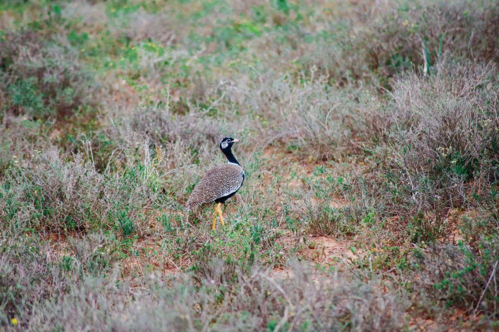 The Last 24 Hours In South Africa's Eastern Cape, Port Elizabeth, Addo National Park (20)