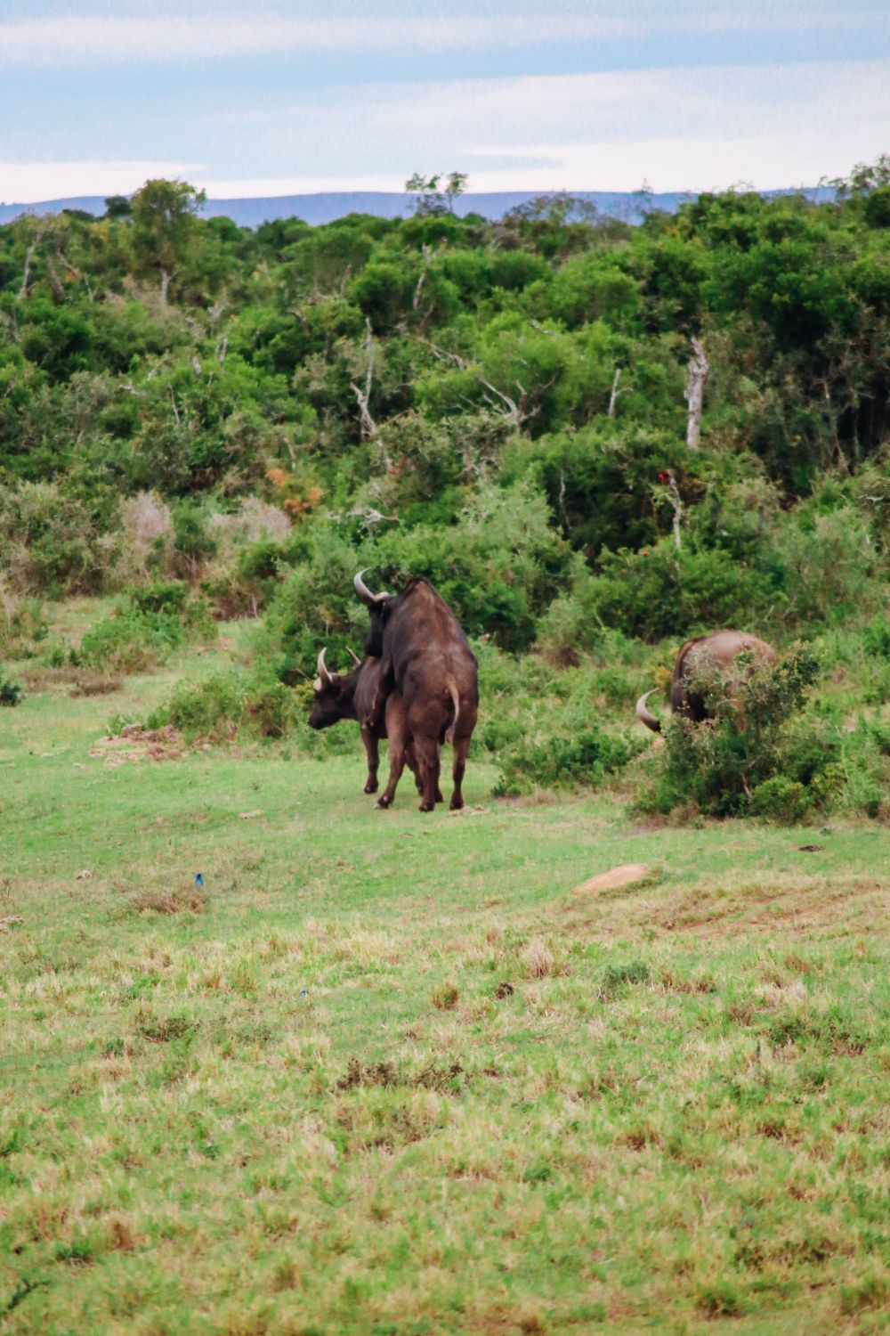 The Last 24 Hours In South Africa's Eastern Cape, Port Elizabeth, Addo National Park (26)