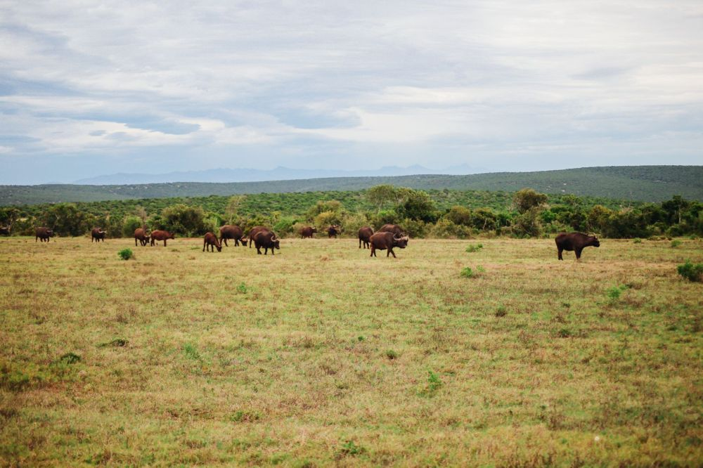 The Last 24 Hours In South Africa's Eastern Cape, Port Elizabeth, Addo National Park (29)