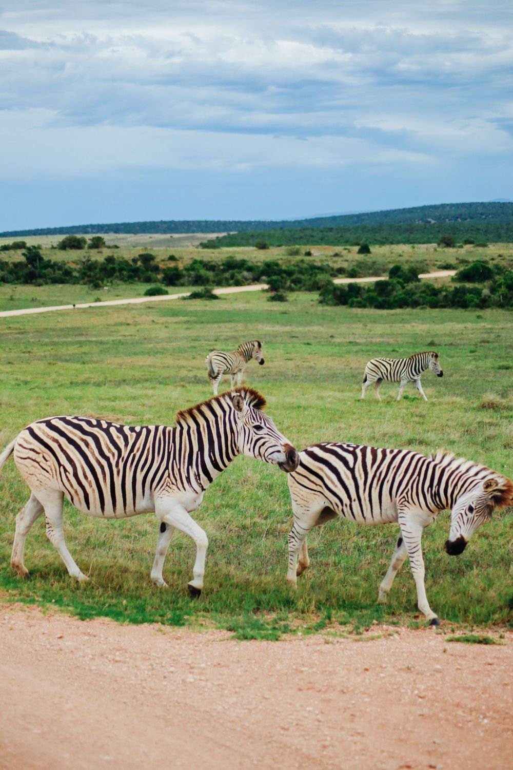 The Last 24 Hours In South Africa's Eastern Cape, Port Elizabeth, Addo National Park (34)