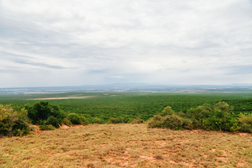 The Last 24 Hours In South Africa's Eastern Cape, Port Elizabeth, Addo National Park (45)
