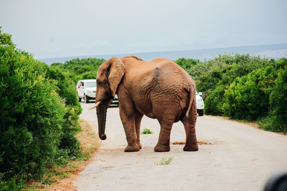 The Last 24 Hours In South Africa's Eastern Cape, Port Elizabeth, Addo National Park (46)