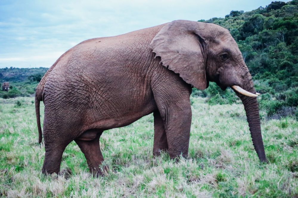 The Last 24 Hours In South Africa's Eastern Cape, Port Elizabeth, Addo National Park (48)
