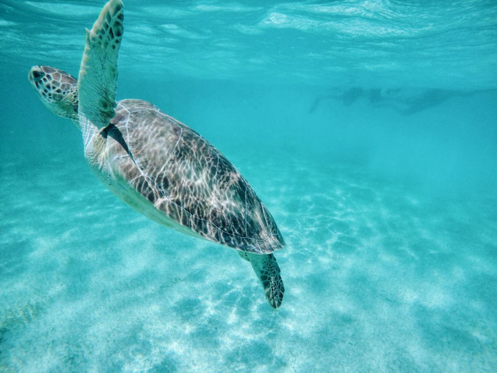 9 Things To Do When You Visit Cancun In Mexico That Don't Involve Partying (48)