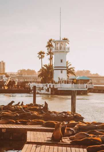 Free Things To Do In San Francisco (10)