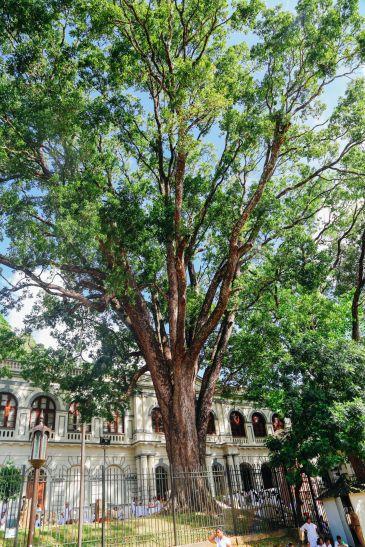 Dambulla Cave Temple And A Trip To Kandy, Sri Lanka (45)