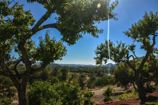 This Is Your Oasis Of Calm In Ibiza - Soulshine Yoga Retreat (5)