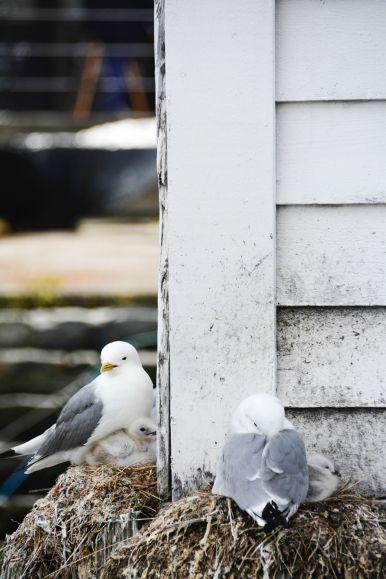 Things To See In Alesund in Norway (29)