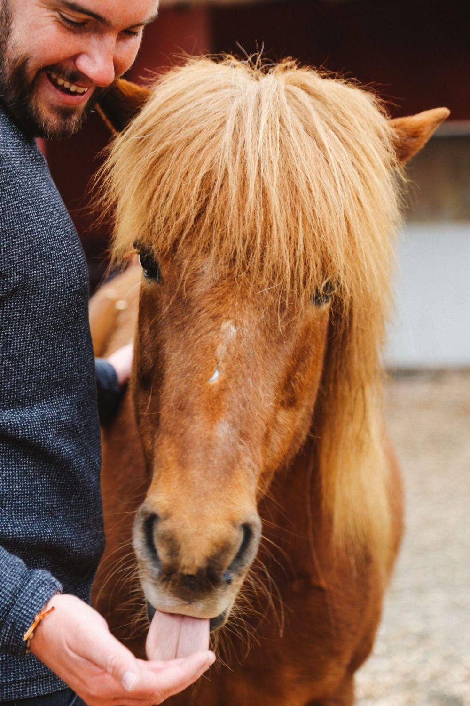 Horse Riding In The Faroe Islands... (49)