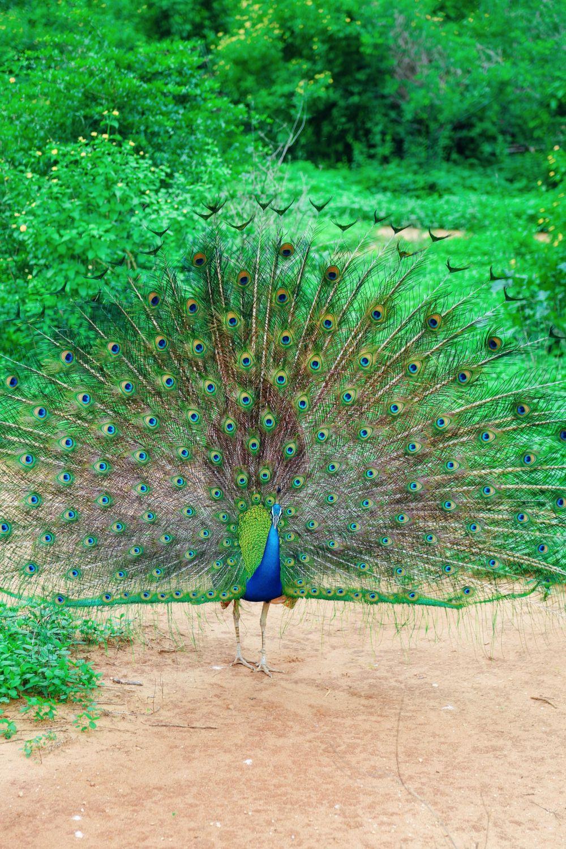 A Taste Of Sri Lanka... (10)