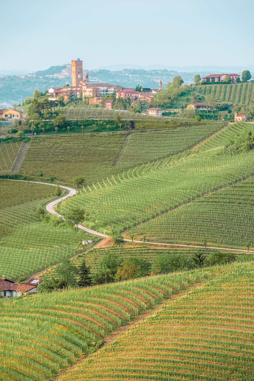 Wine Regions In Europe (25)