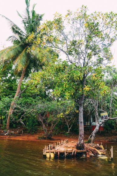 A Journey Down The Madu Ganga River, Sri Lanka (28)