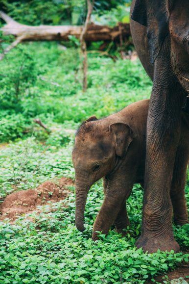 On Elephant Safari In Udawalawe, Sri Lanka (10)