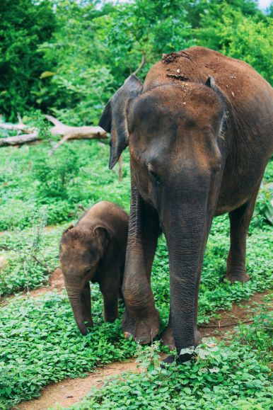 On Elephant Safari In Udawalawe, Sri Lanka (11)