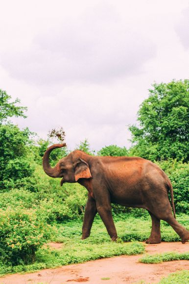 On Elephant Safari In Udawalawe, Sri Lanka (21)