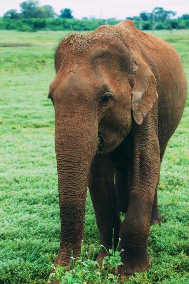 On Elephant Safari In Udawalawe, Sri Lanka (32)