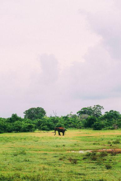 On Elephant Safari In Udawalawe, Sri Lanka (43)