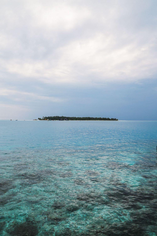 Reef Explorers... At the Angsana Velavaru Maldives (1)