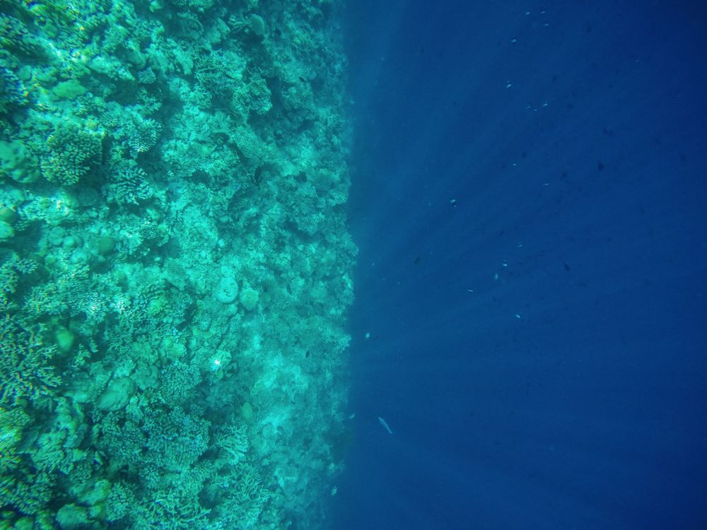 Reef Explorers... At the Angsana Velavaru Maldives (17)