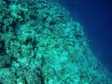 Reef Explorers... At the Angsana Velavaru Maldives (19)