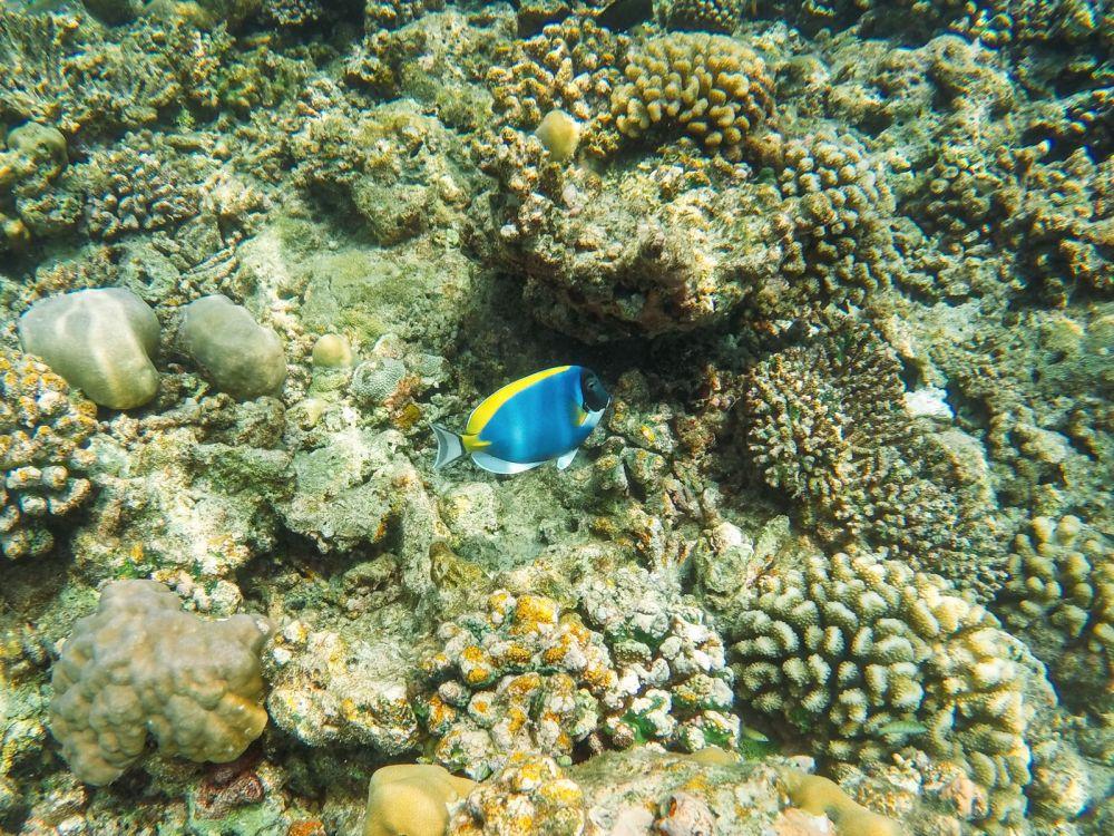 Reef Explorers... At the Angsana Velavaru Maldives (30)