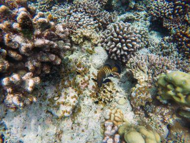 Reef Explorers... At the Angsana Velavaru Maldives (41)