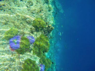 Reef Explorers... At the Angsana Velavaru Maldives (47)