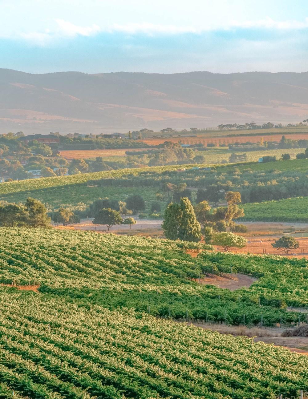 Best Vineyards In Australia (10)
