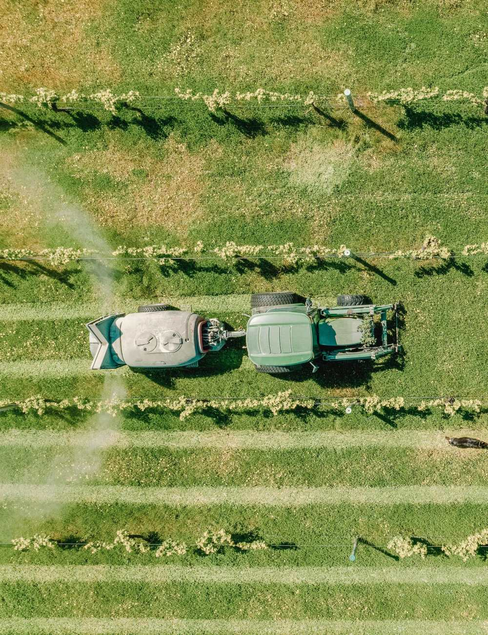 Best Vineyards In Australia (9)