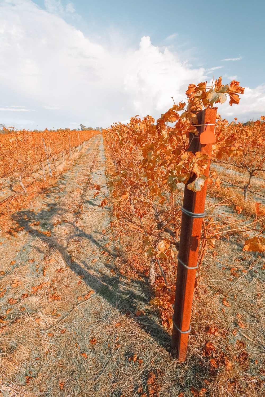 Best Vineyards In Australia (7)