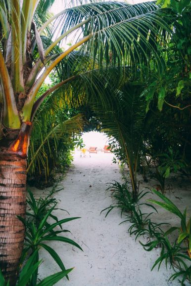 Maafushivaru, Birthing Dolphins And Swimming With Manta Rays... In The Maldives (21)