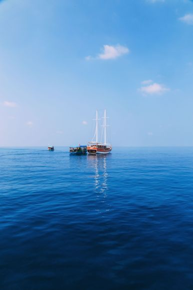 Maafushivaru, Birthing Dolphins And Swimming With Manta Rays... In The Maldives (35)