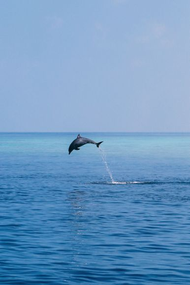 Maafushivaru, Birthing Dolphins And Swimming With Manta Rays... In The Maldives (44)