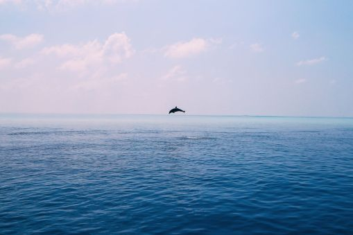 Maafushivaru, Birthing Dolphins And Swimming With Manta Rays... In The Maldives (50)