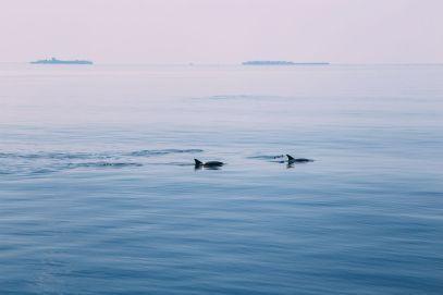 Maafushivaru, Birthing Dolphins And Swimming With Manta Rays... In The Maldives (76)
