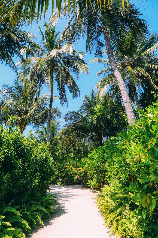 Sunshine and Island Hues... At Velassaru Maldives (33)