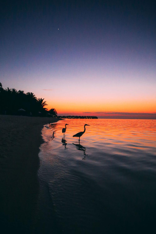 Sunshine and Island Hues... At Velassaru Maldives (51)