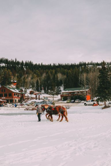 Dog Sledding In Jasper And Ice Hockey In Edmonton - 2 Canadian 'Must-Do's! (29)