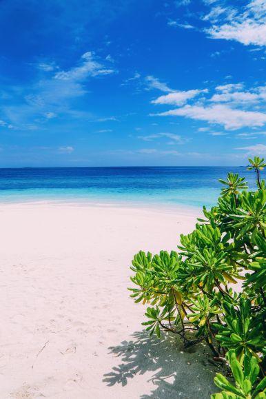Swimming With Wild Turtles And Those Amazing Island Colours... At Kandolhu Island, Maldives (57)